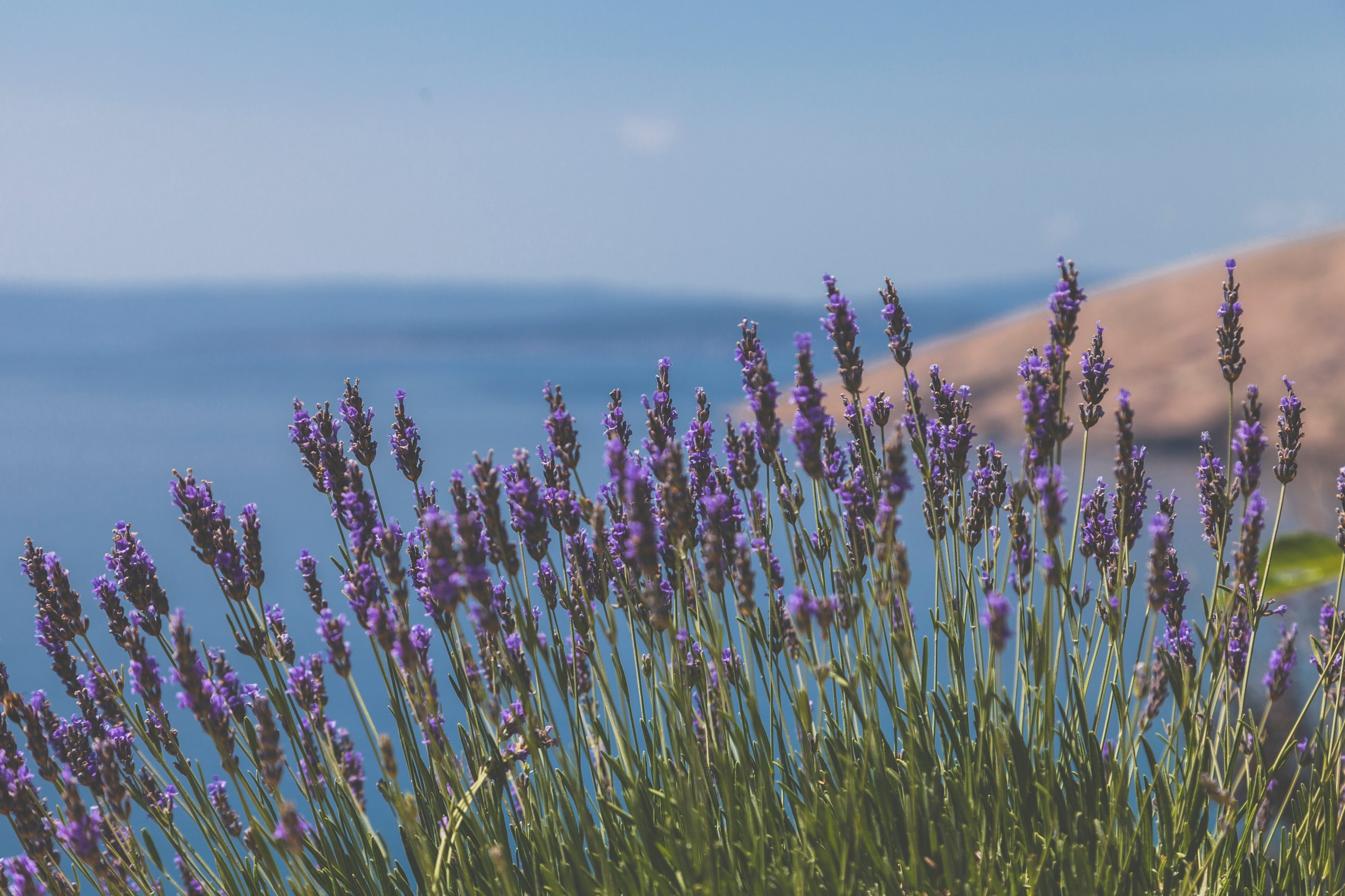 Weekly Aroma Card – Lavender